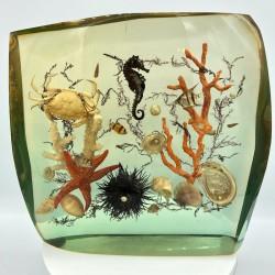 Ancienne résine vintage inclusion poissons, hippocampe, crabe, oursin et coraux