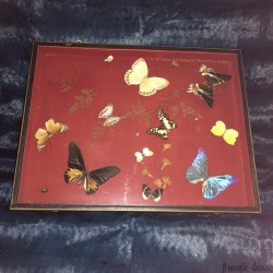 Butterflies and insects under glass | Entomology | Curiosity cabinet